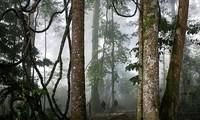 哈尼族祭祀森林保护水源的习俗