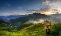 越南穆庚寨梯田摄影作品夺得2017年索尼世界摄影奖National Award
