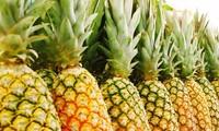 前江省菠萝价格回升