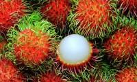 越南南部多种水果价格暴涨