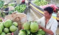 九龙江平原水果价格处高位