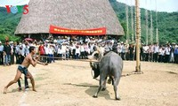 麻族吃牛祭天庆稻节