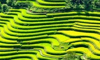 Certificat « Vestiges nationaux » pour les rizières en gradins à Hoang Su Phi