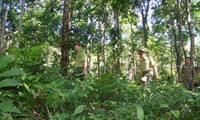 A forest ranger in Truong Son Range
