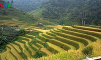 Mu Cang Chai's legendary terraced fields
