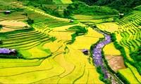"""Vietnamese people travel Vietnam"""