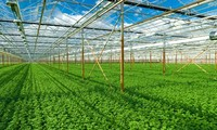 Vietnam invests in high-tech agriculture
