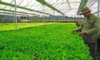 Promoting Vietnam's green brand names