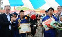 Kontes Ratu Kecantikan  Sapi Perahan di provinsi Son La