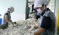 Provinsi Ben Tre membangun pabrik pengolahan kelapa ekspor yang pertama di Vietnam