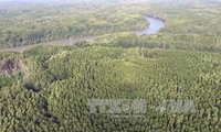 """International Day of Forests: FAO calls on Central American countries to protect the """"green lung"""""""