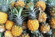 越南南部坚江省菠萝价格涨跌反常