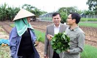 越南政府副总理武德但对兴安省无公害蔬菜生产模式进行考察