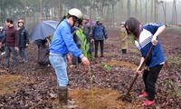 Bewohner in Phu Tho pflanzen Bäume zum Waldanbau