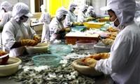 Die USA erkennen an, dass vietnamesische Garnelen nicht zu Dumpingpreisen verkauft werden