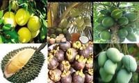 Mekong-Delta baut Handelsmarken für Exportfrüchte aus