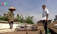 Bauern in Ho Chi Minh Stadt engagieren sich für wissenschaftlich- technologische Innovation