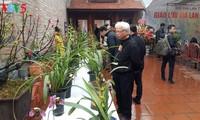 Fest der Orchideen in Hanoi