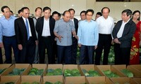 Den Knoten der vietnamesischen Landwirtschaft aufmachen