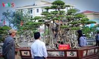Triển lãm cây cảnh huyện Phúc Thọ