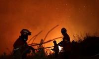 Incendies au Portugal et en Espagne: le bilan s'alourdit à 45 morts
