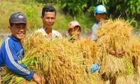 Landwirtschaft spielt eine Schlüsselrolle in der Entwicklung Vietnams