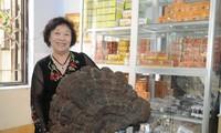 Erfolge der Unternehmerin Nguyen Thi Chinh stammen aus Pilzanbau