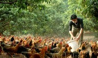 Modell zur Armutsbekämpfung im Kreis Long Thanh