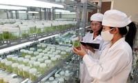 Vietnamesisch-japanische Kommission tagt über Zusammenarbeit in Technologie