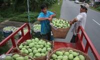Bauern in Dong Thap exportieren landwirtschaftliche Produkte