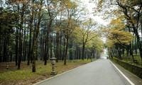 Laubverfärbung im Nationalpark Ba Vi