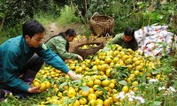 Bac Kan entwickelt Landwirtschaftsprodukten mit geographischen Herkunftsangaben