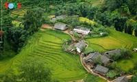 Eindruck von gelben Reisterrassen