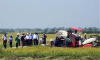 Aufbau des Produktionsmodells großer Felder in Ninh Thuan