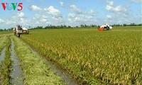 Pertanian daerah dataran rendah sungai Mekong menghadapi tantangan integrasi