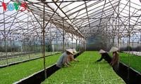 Provinsi Ha Nam mengembangkan pertanian teknologi tinggi