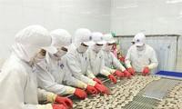 Perikanan Vietnam menuju ke target meningkatkan nilai ekspor udang