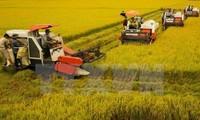 Memperluas batas kepemilikan lahan untuk menuju ke produksi besar-besaran  di daerah dataran rendah sungai Mekong