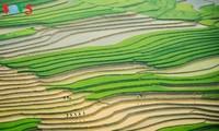 Mu Cang Chai pada musim memuntahkan air, keindahan lukisan yang berwarna-warni