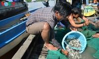 Daerah dataran rendah sungai Mekong pada musim air pasang