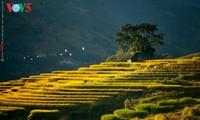 Золотая осень в горных районах на севере Вьетнама