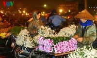 Chợ hoa Quảng An rực rỡ về đêm