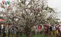 Lễ hội hoa anh đào Nhật Bản thu hút hàng nghìn bạn trẻ tham gia