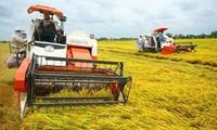 Phát triển hợp tác xã kiểu mới nâng thu nhập cho nông dân