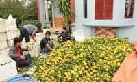 Tìm thương hiệu cho nông sản Lục Ngạn