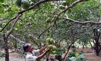 Nông dân Thừa Thiên - Huế làm du lịch cộng đồng