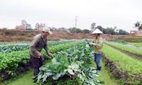 Hiệu quả của mô hình liên kết 4 nhà ở Thị xã Quảng Yên, tỉnh Quảng Ninh