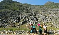 Cao nguyên đá Đồng Văn hút khách du lịch trong nước và quốc tế