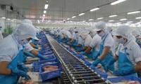 Việt Nam có 23 cơ sở kinh doanh cá tra đủ điều kiện xuất khẩu sang Mỹ