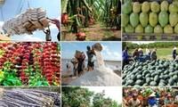 Thúc đẩy xuất khẩu và đảm bảo nguồn cung nông sản cuối năm